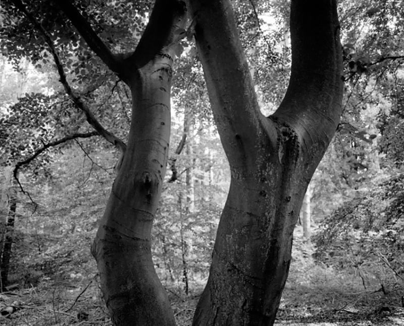 Wood5s